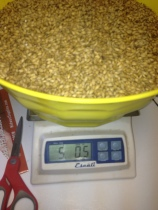 Measuring Grains for the KBC 505