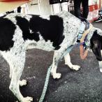Ol' Blue from Maryville's Bluetick Brewery hung out with us for awhile